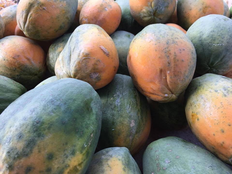 Paw paws or papayas