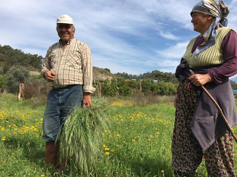 Cevdet and Gulay collecting grass for the cows