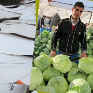 Cabbages at the market