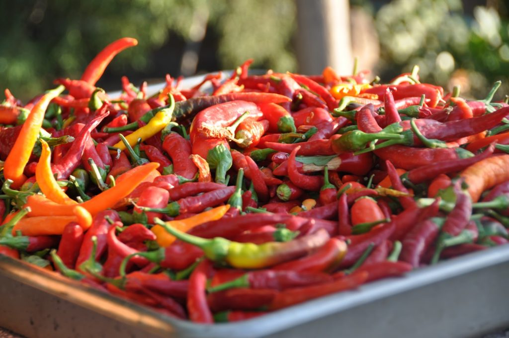 Red peppers drying at Biber Evi, Assos