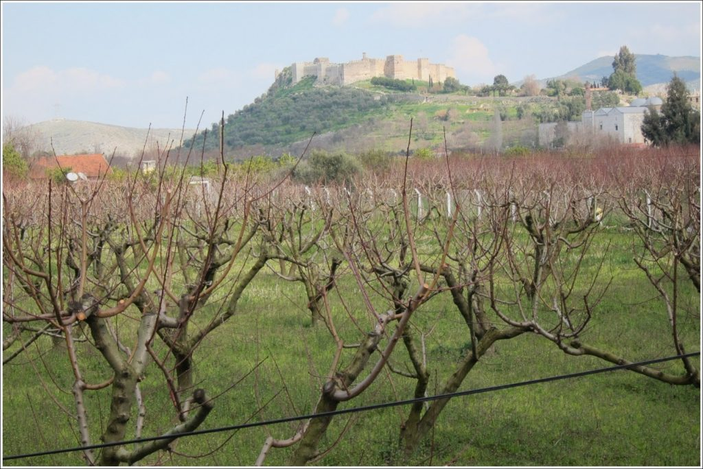 View through peach trees of the Grand Fortress of Selçuk on Ayasoluk Hil